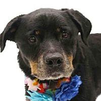 Adopt A Pet :: ROXY - Orlando, FL