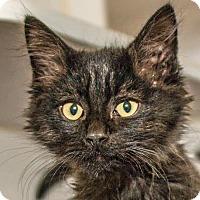 Adopt A Pet :: Donald - Prescott, AZ