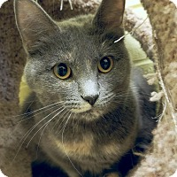 Adopt A Pet :: Bonnie - Edwards AFB, CA