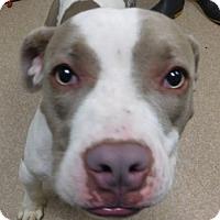 Adopt A Pet :: Dolly - Saginaw, MI