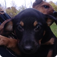 Adopt A Pet :: Buster - Kendall, NY