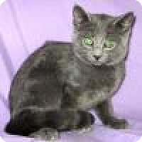 Adopt A Pet :: Stormy - Powell, OH