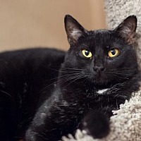Adopt A Pet :: Maganda - Palm Springs, CA