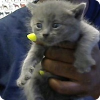 Adopt A Pet :: Dolly - Decatur, GA