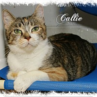 Calico Cat for adoption in Shippenville, Pennsylvania - Callie