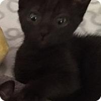Adopt A Pet :: Milly - Houston, TX