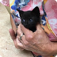 Adopt A Pet :: Binx - Zanesville, OH