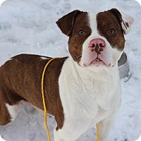Adopt A Pet :: Polar - Greensboro, NC
