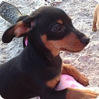 Adopt A Pet :: Tomasso aka Tommy - West Palm Beach, FL