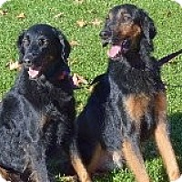 Adopt A Pet :: Brother & Sister - Phoenix, AZ