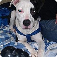 Adopt A Pet :: Lana - Clarksburg, MD