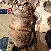 Adopt A Pet :: Murdock - Byron Center, MI