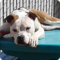 Adopt A Pet :: Lucy- in CT - West Hartford, CT