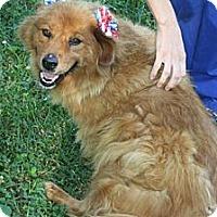 Adopt A Pet :: Brownie - Homewood, AL