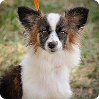 Adopt A Pet :: Bella - Gainesville, FL