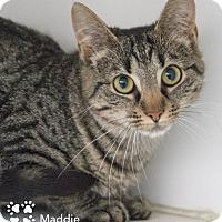 Adopt A Pet :: Maddie - Merrifield, VA