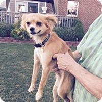 Adopt A Pet :: George - Beavercreek, OH