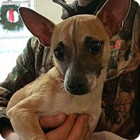 Adopt A Pet :: Neville - Lisbon, OH
