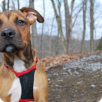 Adopt A Pet :: Jake - New Castle, PA