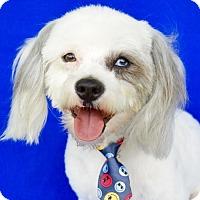 Adopt A Pet :: Danny - Irvine, CA