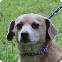 Adopt A Pet :: Chloe - Locust Fork, AL
