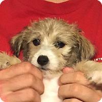 Adopt A Pet :: Emmi - San Marcos, CA