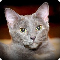 Adopt A Pet :: Asher - Knoxville, TN