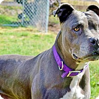 Adopt A Pet :: Pebbles,lovable & lively! - Snohomish, WA