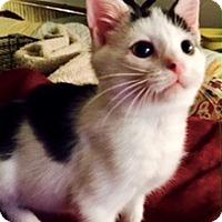 Adopt A Pet :: Solie - Colmar, PA
