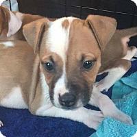 Adopt A Pet :: Deja - Fort Lauderdale, FL