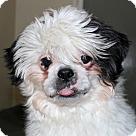 Adopt A Pet :: 23797 - George
