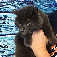Adopt A Pet :: COMET - Hibbing, MN