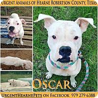 Adopt A Pet :: Oscar - Hearne, TX
