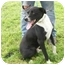 Photo 4 - Border Collie Mix Dog for adoption in Lexington, Missouri - Jessie