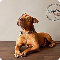 Adopt A Pet :: King - Medina, OH