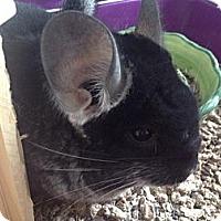 Adopt A Pet :: Myrna - Titusville, FL