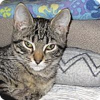 Adopt A Pet :: Charli - Richfield, OH