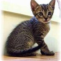 Adopt A Pet :: Bob - Shelton, WA