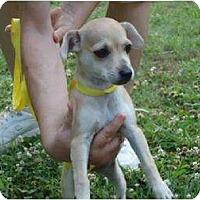 Adopt A Pet :: Buttercup - Allentown, PA