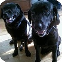 Adopt A Pet :: Hunter & Bear - BONDED PAIR - Laingsburg, MI
