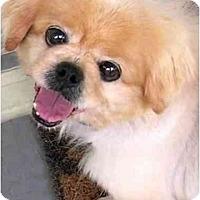Adopt A Pet :: Liang - Mays Landing, NJ