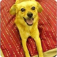 Adopt A Pet :: Bradley - Mocksville, NC
