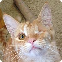 Adopt A Pet :: Robin - Winchester, CA