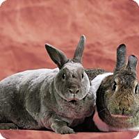 Adopt A Pet :: Stormy and Hershey - Marietta, GA