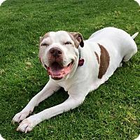 Adopt A Pet :: Mabel - La Habra, CA