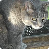 Adopt A Pet :: Penelope - Roseville, MN