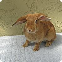 Adopt A Pet :: Aloha - Bonita, CA