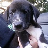 Adopt A Pet :: Tink - Gainesville, FL