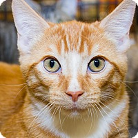 Adopt A Pet :: Flynn - Irvine, CA