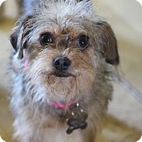 Adopt A Pet :: Minnie - Norwalk, CT